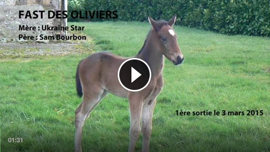 Fast des Oliviers