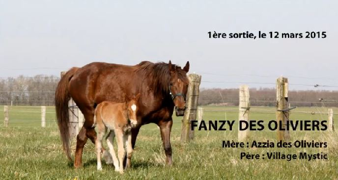 Fanzy des Oliviers